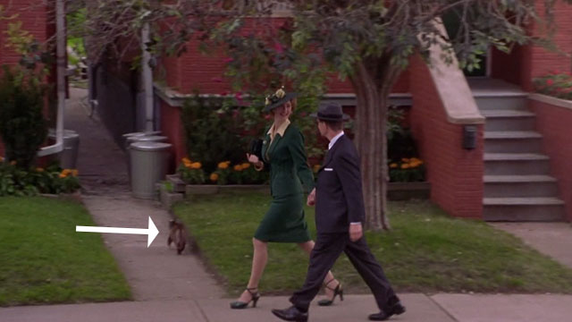 Focus - gray cat passing by Lawrence William H. Macy and Gertrude Laura Dern