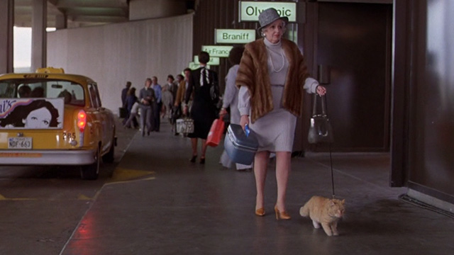 For the Love of Benji - orange tabby cat on leash with fancy collar outside airport