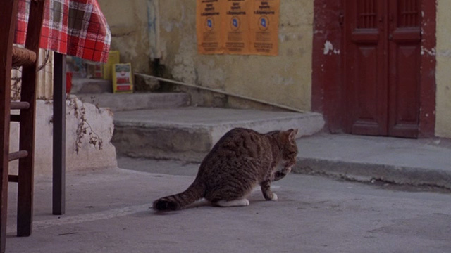 For the Love of Benji - tabby cat licking its paw on street