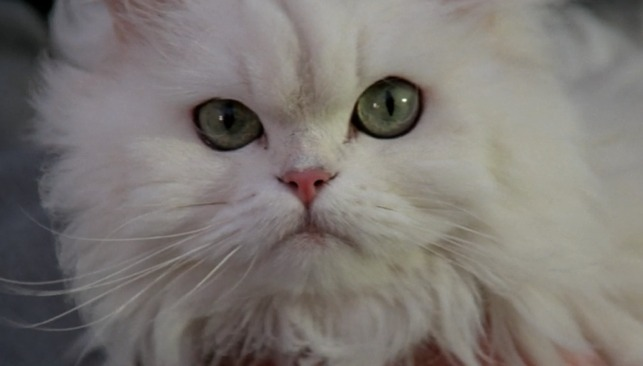 For Your Eyes Only - Blofeld's cat Solomon