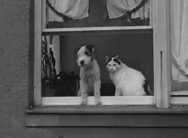 Four-Footed Prettiness - cat and terrier in window