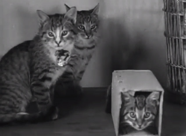 Four-Footed Prettiness - tabby cats with kitten in box