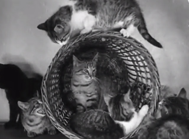 Four-Footed Prettiness - various kittens in a wicker basket