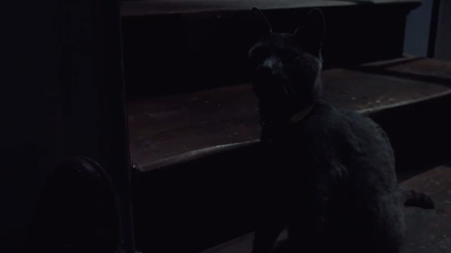 Frantic - gray cat sitting by stairs in the dark