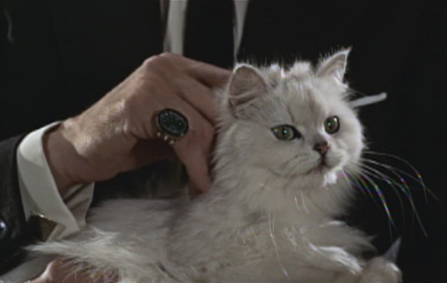 Why Does Blofeld Like Cats