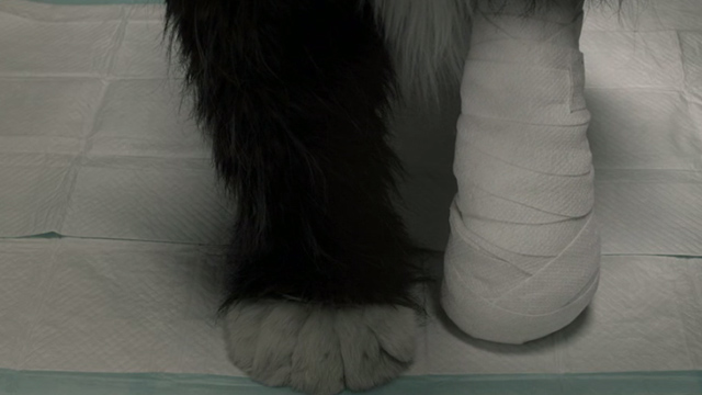 The Future - shot of fake cat paws for Paw Paw