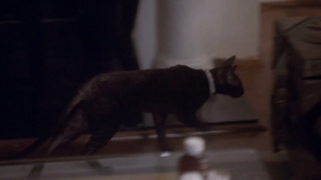 F/X2 - black Cornish Rex cat running by couch