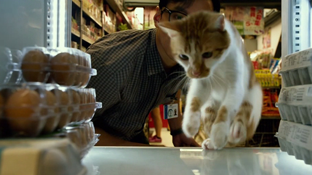 Geostorm - orange and white cat jumping into refrigeration unit in convenience store