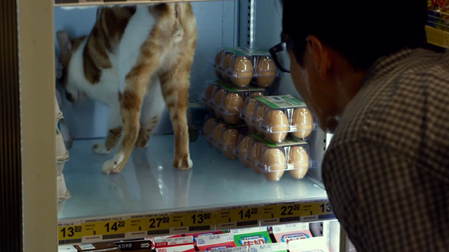 Geostorm - orange and white cat standing on shelf of refrigeration unit in convenience store
