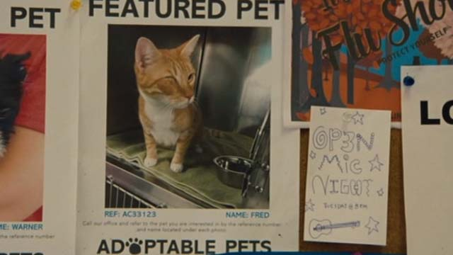 Gifted - one eyed cat Fred on adoption poster