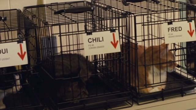 Gifted - one eyed cat Fred in cage beside tuxedo cat Loui and tabby cat Chili