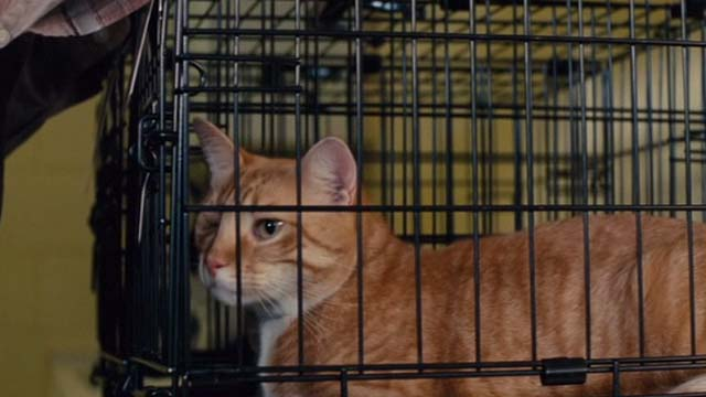 Gifted - one eyed cat Fred in cage