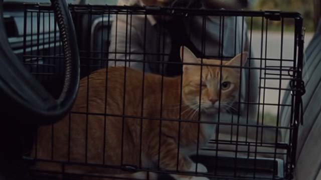 Gifted - one eyed cat Fred in cage in car
