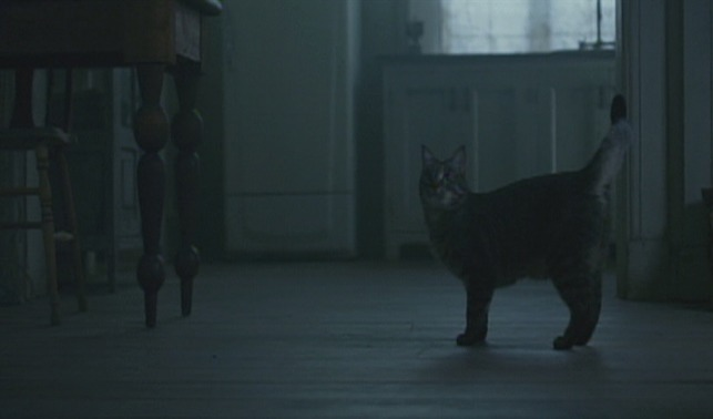 The Girl with the Dragon Tattoo - tabby cat Scotty waits for Blomkvist