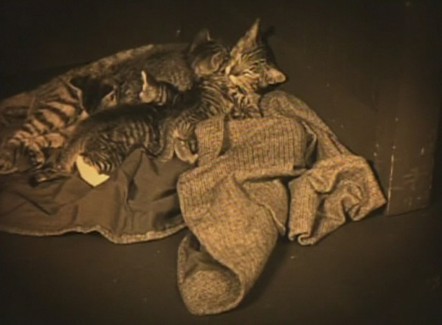 Girl Shy - Mama cat and kittens on coat