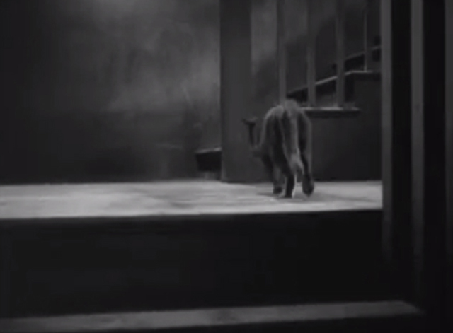 The Godless Girl - black cat on landing between stairs