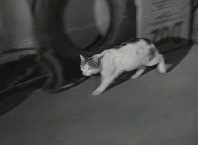 Going to Blazes - cat running through garage