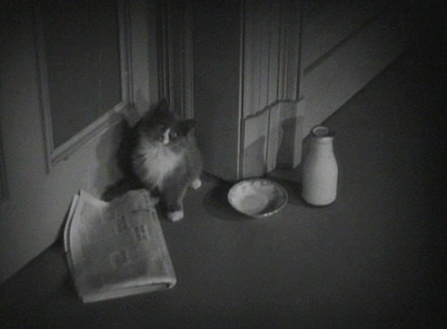 Gold Diggers of 1935 - gray and white kitten waiting outside door