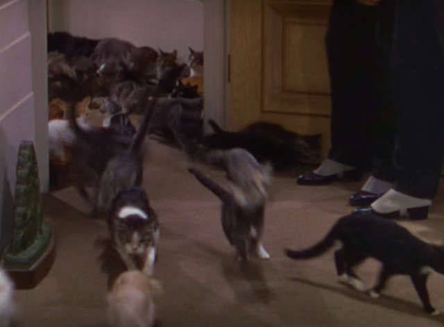 The Goldwyn Follies - cats flooding into office