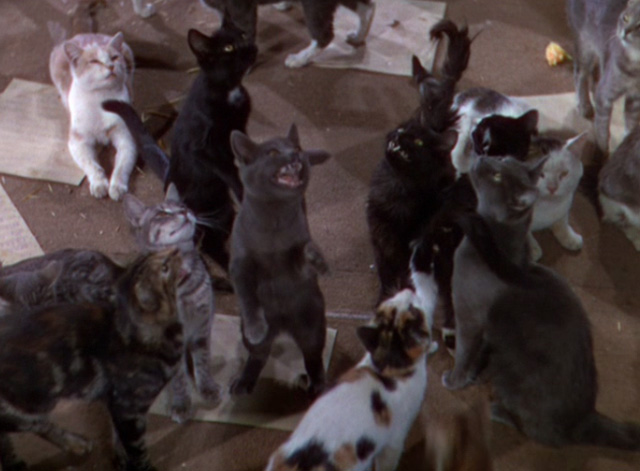 The Goldwyn Follies - group of cats in office
