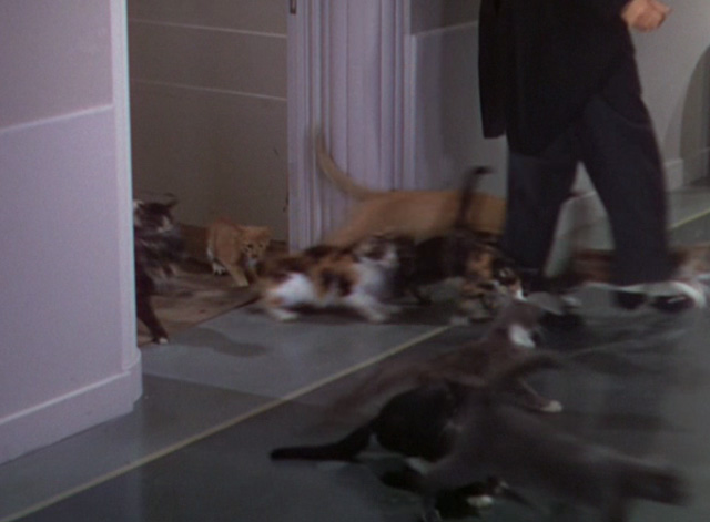 The Goldwyn Follies - cats flooding into hallway