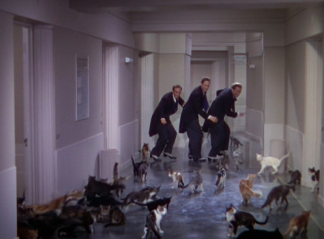 The Goldwyn Follies - cats flooding into hallway and following the Ritz Brothers