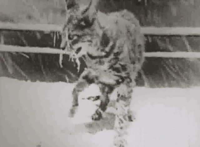 Our Gang - Good Cheer tabby cat in snow