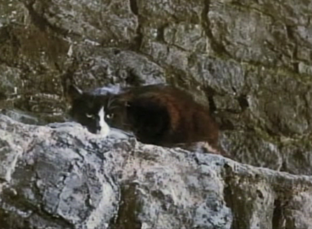 Greyfriars Bobby - tuxedo cat crouching on stone ledge