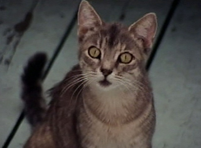 Grey Gardens - cat sitting outside looking at camera
