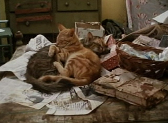 Grey Gardens - cats lying on bed covered with trash