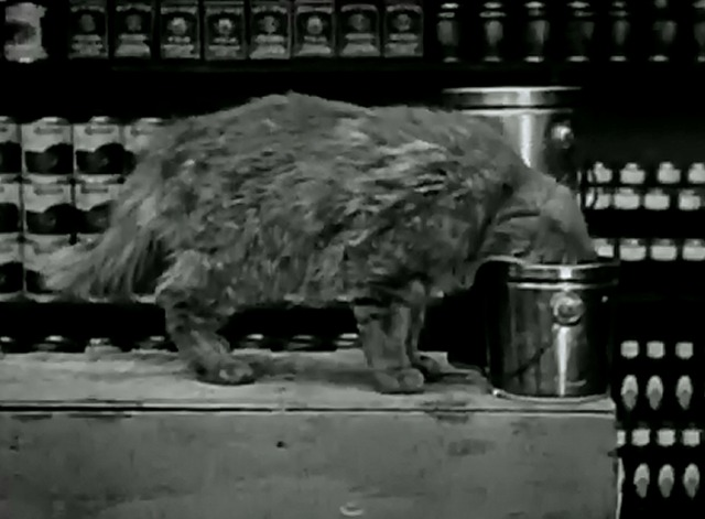 The Grocery Clerk - cat with head inside can eating