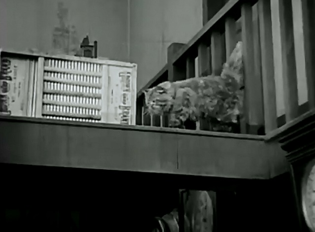 The Grocery Clerk - cat walking on upper floor