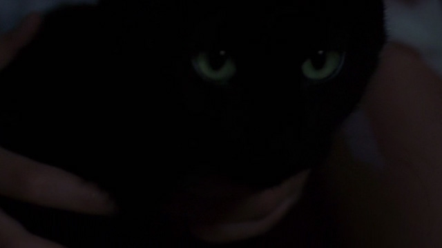 The Grudge - close up of black cat Mar