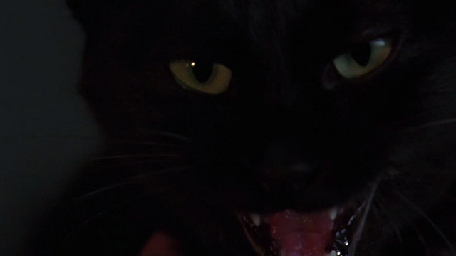 The Grudge - close up of black cat Mar hissing