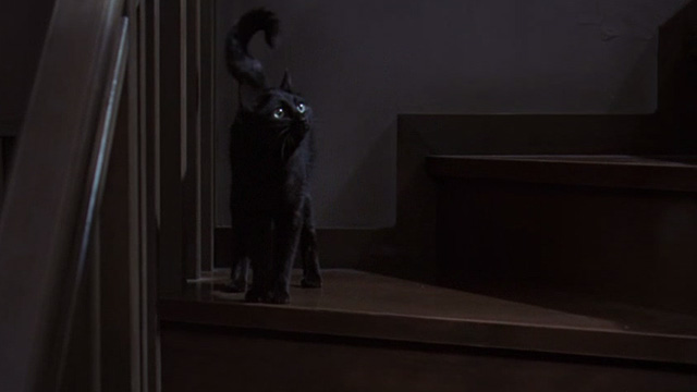 The Grudge - black cat Mar on staircase