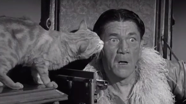 Gypped in the Penthouse - tabby cat licking Shemp Howard's face