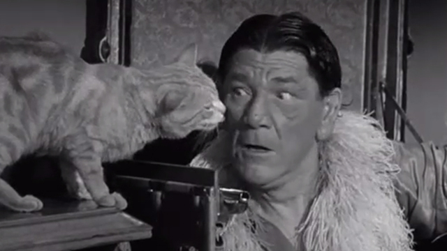 Gypped in the Penthouse - tabby cat next to Shemp Howard