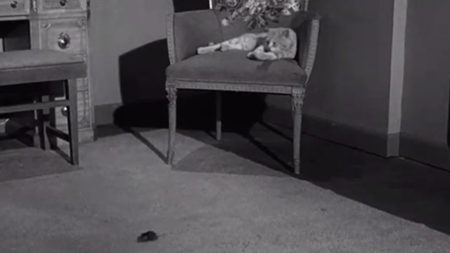 Gypped in the Penthouse - tabby cat sitting on chair with mouse running by