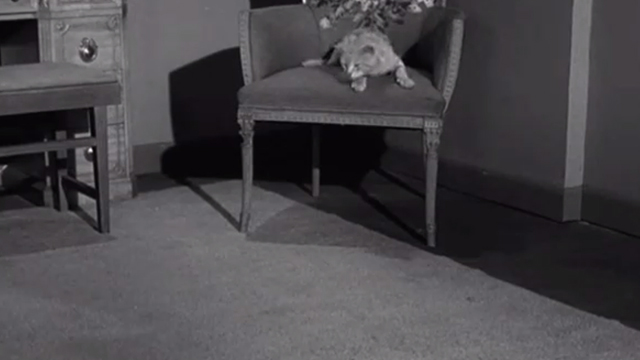 Gypped in the Penthouse - tabby cat about to jump off chair
