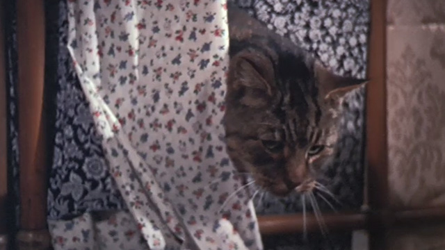 Half a Sixpence - Bengal tabby cat Edwin peeking through fabrics