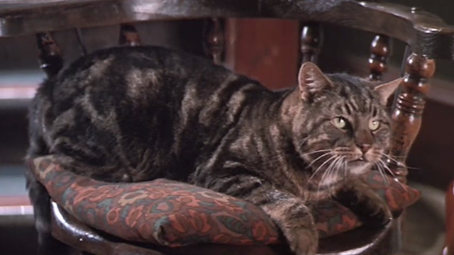 Half a Sixpence - Bengal tabby cat Edwin on chair