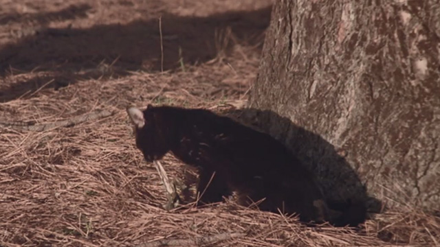 The Hand - black cat Amanda eating lizard by tree