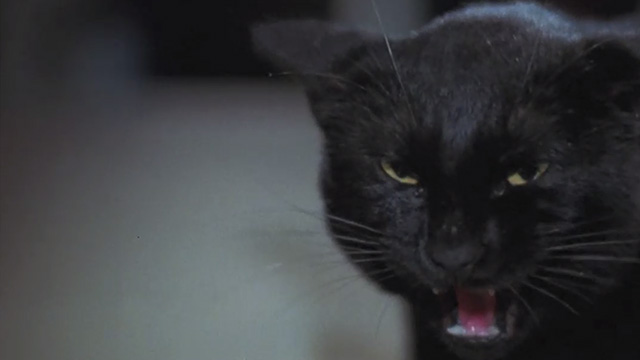 The Hand - black cat Amanda hissing