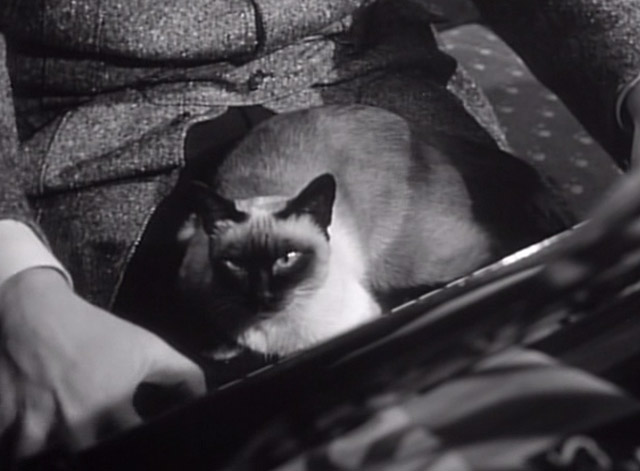 Hangover Square - Siamese cat on lap at piano