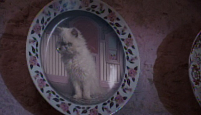 Harry Potter and the Order of the Phoenix - Persian kitten on plate