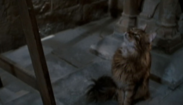 Harry Potter and the Order of the Phoenix - cat Mrs. Norris