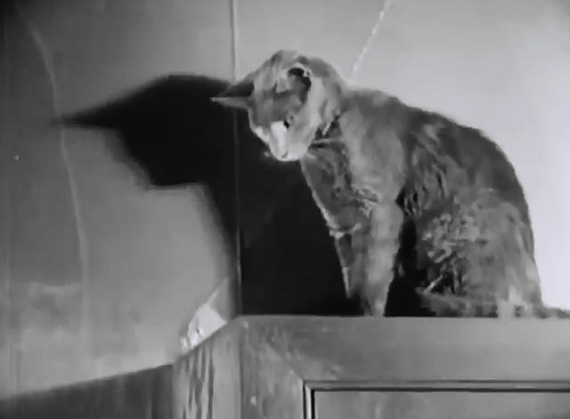 Haunted Spooks - cat on high cabinet