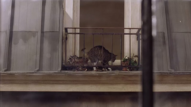 Head in the Clouds - tabby cat with white markings on windowsill across the street
