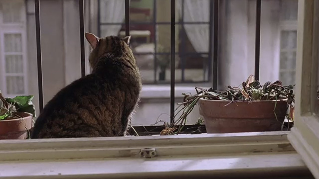 Head in the Clouds - tabby cat with white markings on windowsill