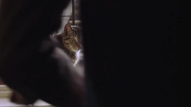 Head in the Clouds - tabby cat with white markings on windowsill looking around at man standing in front